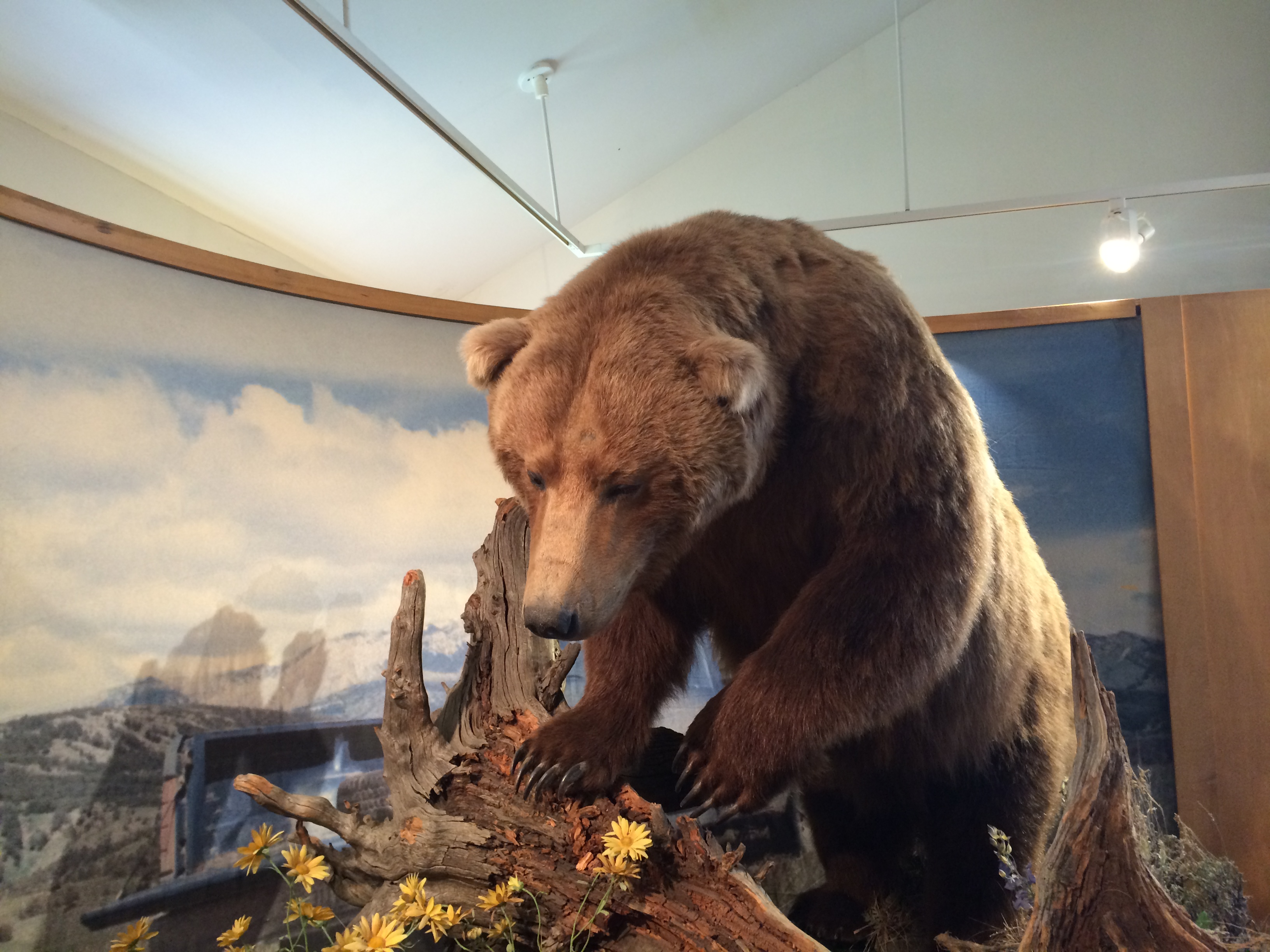 Tour Of Greater Yellowstone